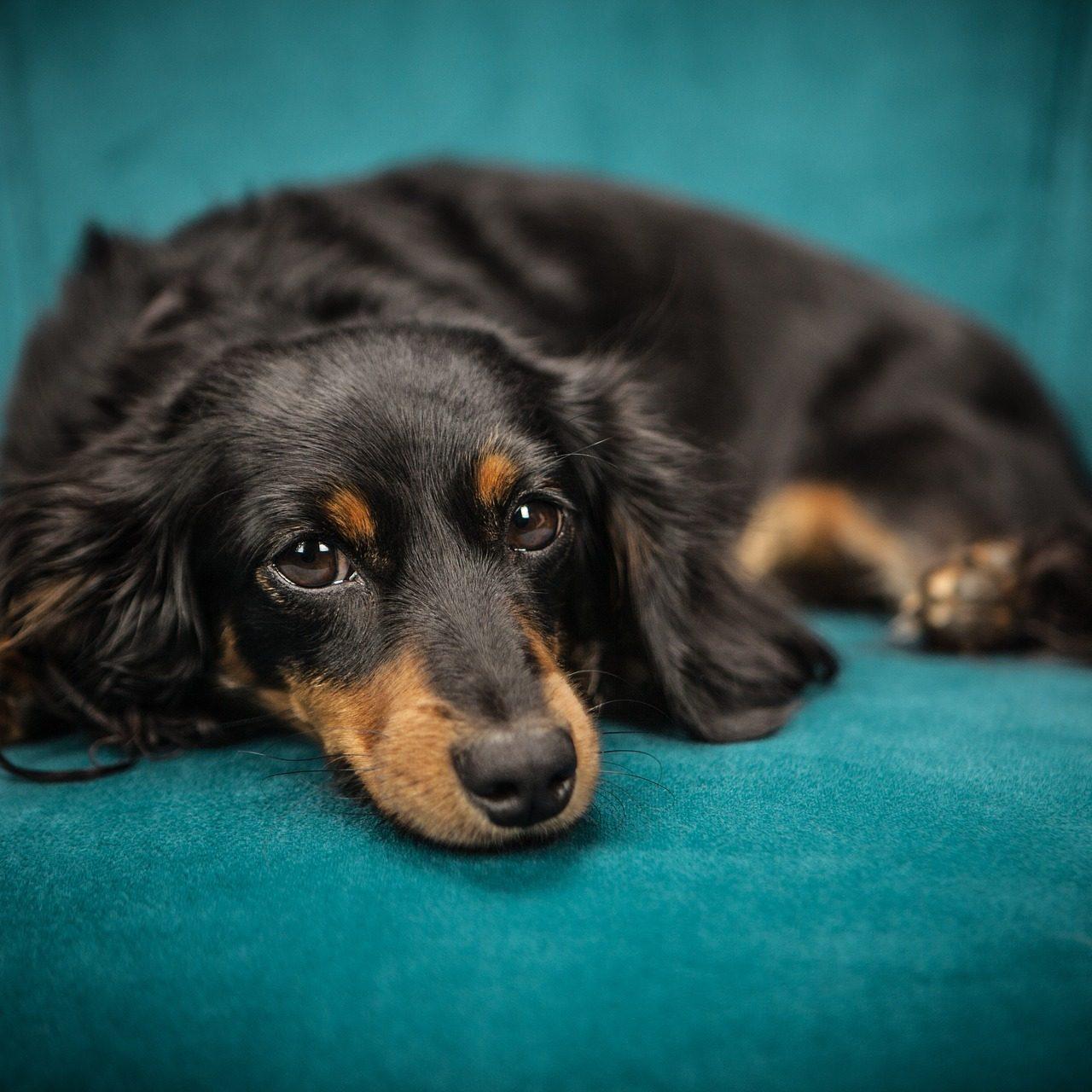 dog-2561134_1920